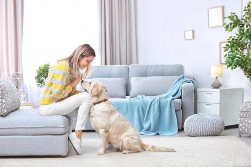 Домашні тварини: інтер'єр, затишний для всіх