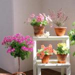 Фарбуємо дерев'яну підставку для квітів