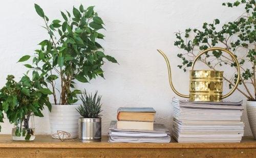 Рослини, які нейтралізують токсичні речовини