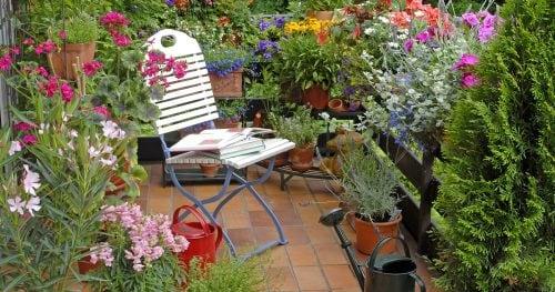 Які квіти обрати для балкону?