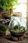 Ось-ось завітає весна. Пропонуємо створити весняну атмосферу – «Forest in the jar».