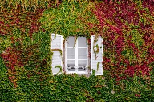 Як правильно вибрати вікна?