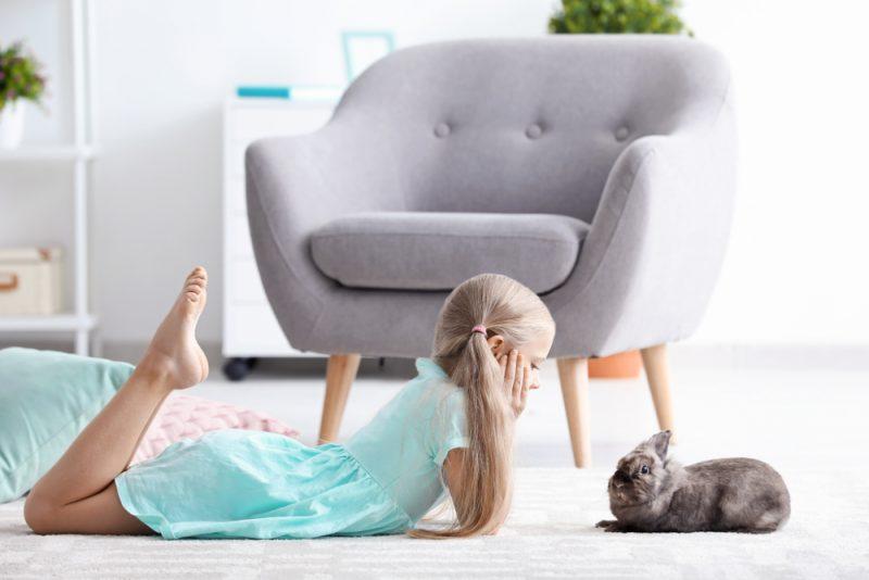 Кролик на килимі